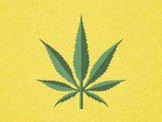cannabis-image-big