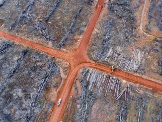 deforestation-cross-image