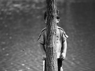 treehide-big